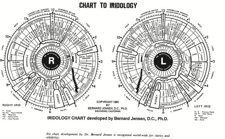 Iridology Chart 2