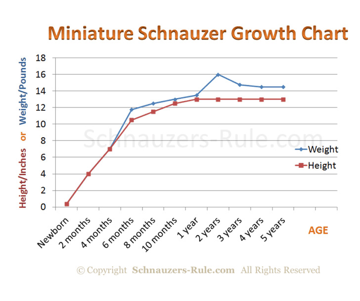 Miniature Schnauzer Puppy Growth Rate Chart