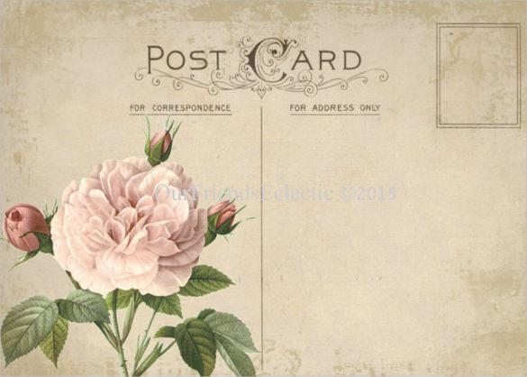 Pink Rose Blank Postcard