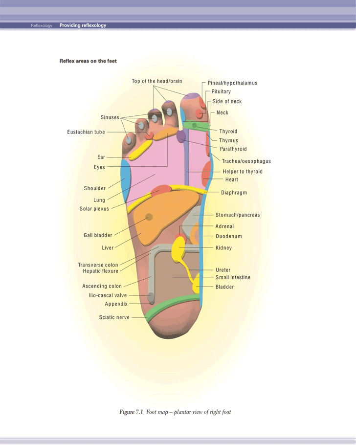 Reflexology Chart 1