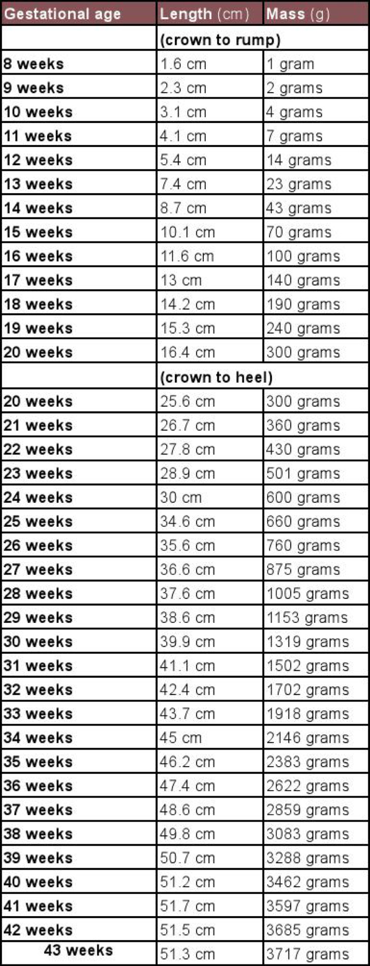 Unborn Baby Growth Chart Week By Week